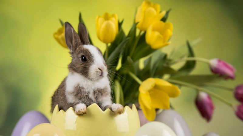 Spring Symbols Rabbit Flowers